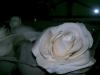 facebook_photo_3855533064143